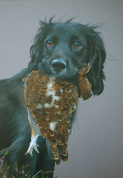 Archie, a black cocker spaniel holding a grouse. A watercolour by Helen Backhouse